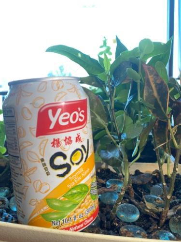 135 - Fresh Soy Bean Drink - Sửa Đậu Nành